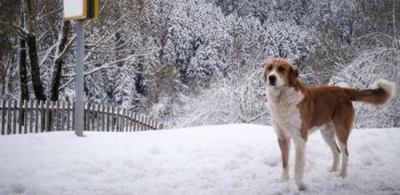 Καιρός: Καταφθάνει νέα ψυχρή εισβολή στη χώρα -Τι «βλέπουν» οι μετεωρολόγοι για το ενδεχόμενο χιονοπτώσεων